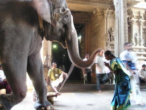 elephant-375_1280
