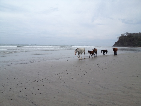 horses on the beach